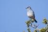 bluebird_mountain_E5I2043