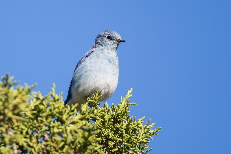 bluebird_mountain_E5I2046