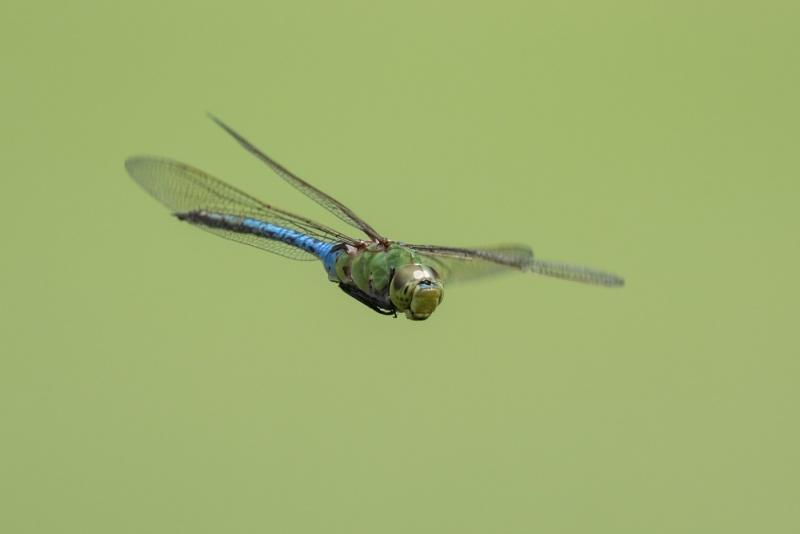 garner_common-green_C8A4547