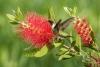 hummingbird_black-chinned_C8A2816