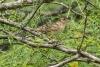 sparrow_C8A2951