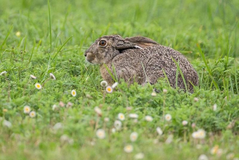rabbit_jack_E5I4042