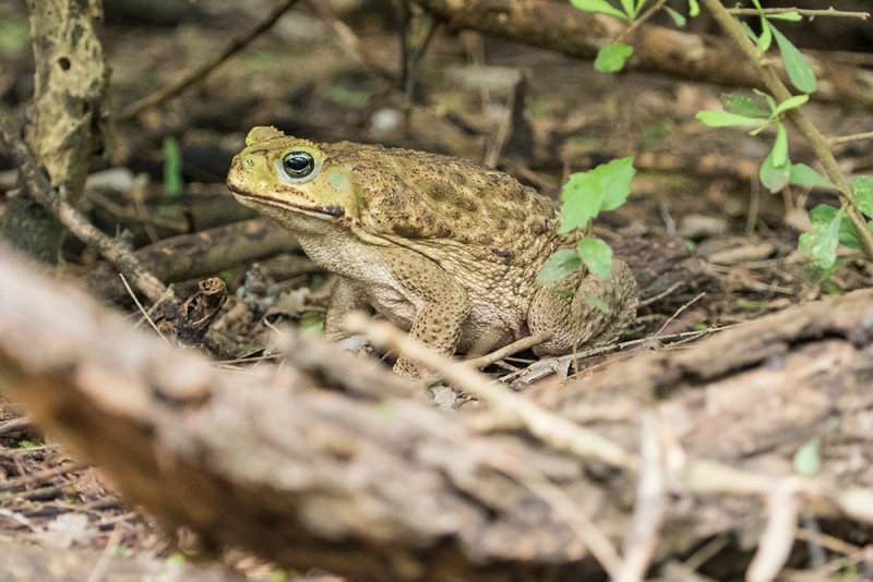 toad_C8A2901