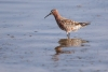 sanderpiper_curlew-sand_12951